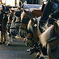 Carriage Horses by Anthony Citro