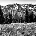 Cascade Mountain Range by David Patterson
