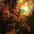 Cascade by Nina Fosdick