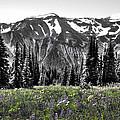 Cascade Range Meadow by David Patterson