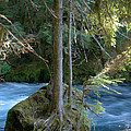 Cascade Rapids by Mick Anderson