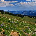 Cascades And Wildflowers by Angela Q