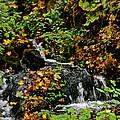 Casual Creek by Susan Herber