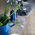 Cat And Flowers by Nailia Schwarz