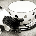 Cat And Mouse Coffee by Andee Design