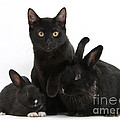 Cat And Rabbits by Mark Taylor
