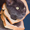 Cat Breading Sandwich  by Kittysolo Photography