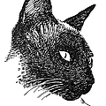 Cat Drawings 5 by Gordon Punt