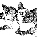Cat-drawings-siamese-2 by Gordon Punt