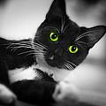 Cat Eyes by Gray  Artus