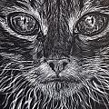 Cat Eyes by Jenny Greiner