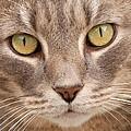 Cat Eyes by Kathy Gibbons