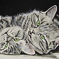 Cat Friends by Carol Blackhurst