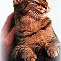 Cat Heaven by Kathy  White