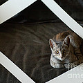 Cat In A Frame by Micah May