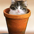 Cat In A Pot by Snake Jagger