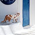 Cat In Mykonos by Laura Melis