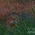 Cat In The Grasses by Rrrose Pix