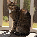 Cat In The Sun by Megan Cohen