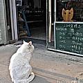 Cat In The Window by Louise Peardon