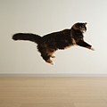 Cat Jumping In Air by Junku