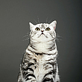 Cat Looking Up by Martin Poole