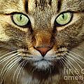 Cat Named Hooch by Joanne West