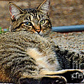 Cat Nap Interuption by Debbie Portwood