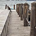 Cat On Bosporus Wharf by Kantilal Patel