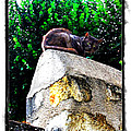 Cat On Medieval Wall by Joan  Minchak