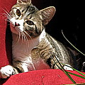Cat On Red by Inga Smith