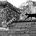 Cat On Slate Roof by Leslie Lovell