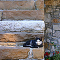 Cat On Stairs by Emanuel Tanjala