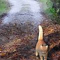 Cat On The Road Again by Constance Woods