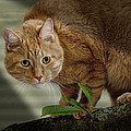 Cat Out On A Limb by Randall Nyhof