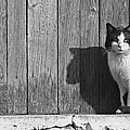 Cat Portrait by Gabriela Insuratelu