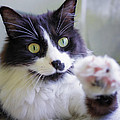 Cat Reaches For Camera by Lori Coleman