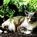Cat Relaxing In Garden by Susan Savad