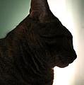 Cat Silhouette by Nina Mirhabibi
