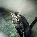 Cat Sitting On Floor by Raj's Photography
