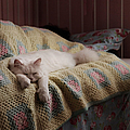 Cat Sleeping by Photography by Meisi.