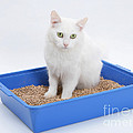 Cat Using Litter Tray by Mark Taylor
