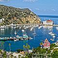 Catalina by Marie Morrisroe