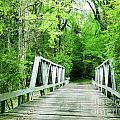 Catalpa Plantation Bridge by Lizi Beard-Ward