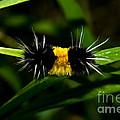 Caterpillar by Terry Elniski
