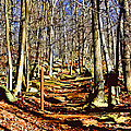 Catoctin Trail by Stephen Younts