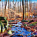 Catoctin Woods by Stephen Younts
