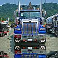 Catr0312-12 by Randy Harris