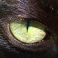 Cat's Eye by Shannon Blanchard