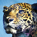 Cats Eyes - Leopard by Bill Cannon
